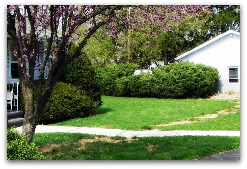 Path and Plum tree